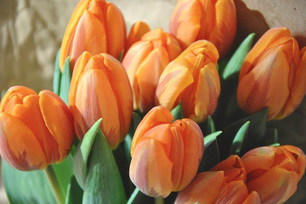 tulipanes ramo novia