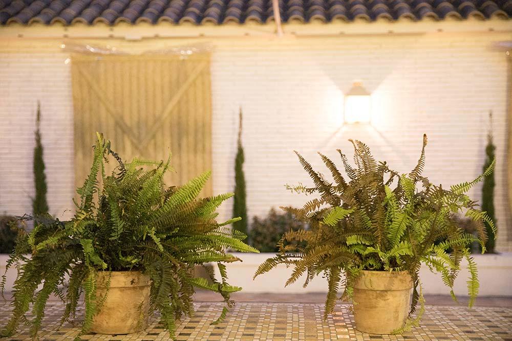 Espacio boho detalle plantas patio